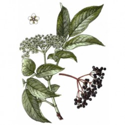 Bez černý květ 50g