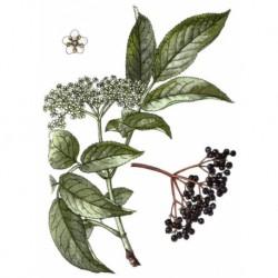 Bez černý plod 50g