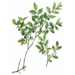 Borůvka plod 50g